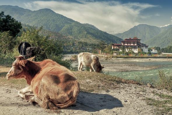 Geluk is een richting Buthan door Goran Hoglund